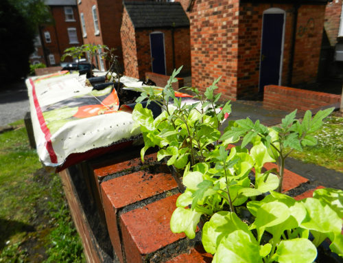 Rolnictwo Miejskie Ciąg Dalszy: Sadzenie