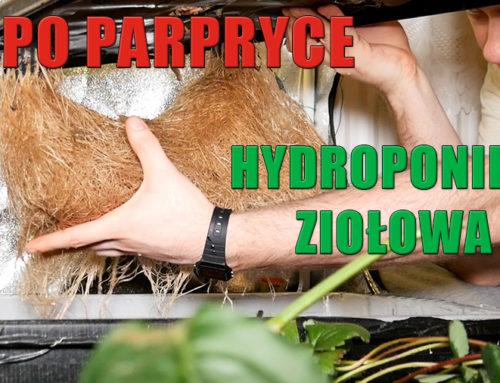 Porządki w hydroponice Sadzimy zioła część 1