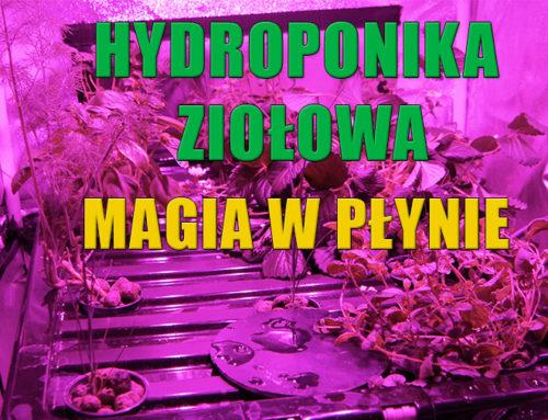 Hydroponika ziołowa z magicznym nawozem